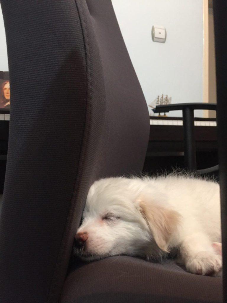 آیریس - سگ
